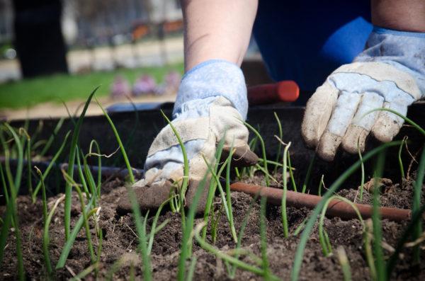 Garden Group - free